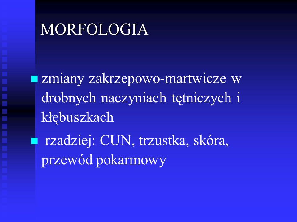 MORFOLOGIA zmiany zakrzepowo-martwicze w drobnych naczyniach tętniczych i kłębuszkach.