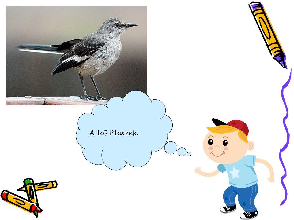 A to Ptaszek.