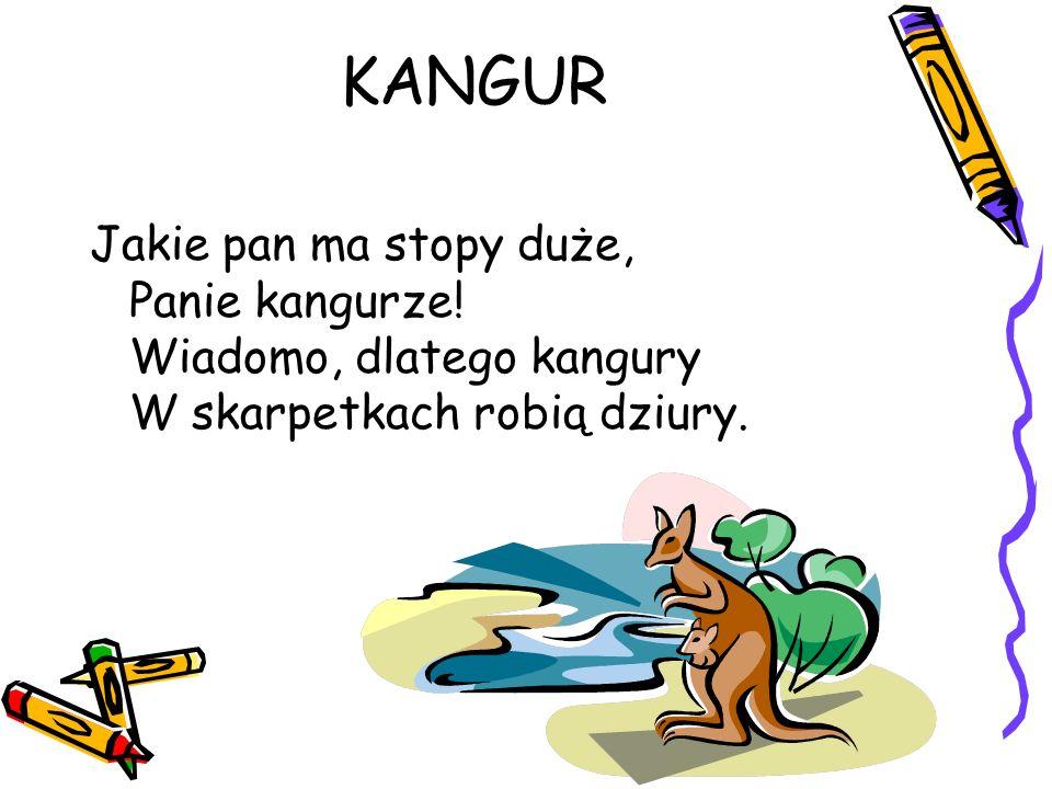 KANGUR Jakie pan ma stopy duże, Panie kangurze.