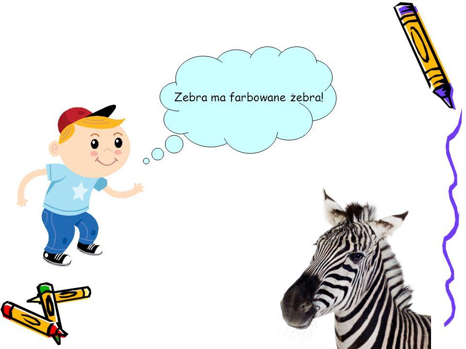 Zebra ma farbowane żebra!