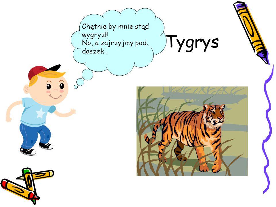 Tygrys Chętnie by mnie stąd wygryzł! No, a zajrzyjmy pod daszek .