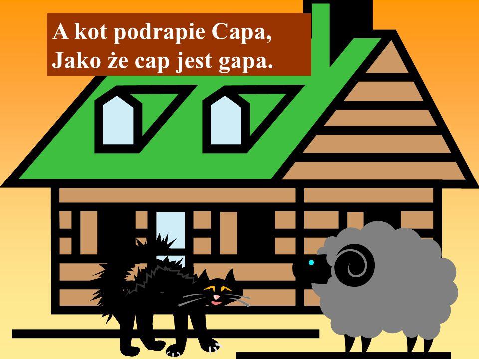 A kot podrapie Capa, Jako że cap jest gapa.