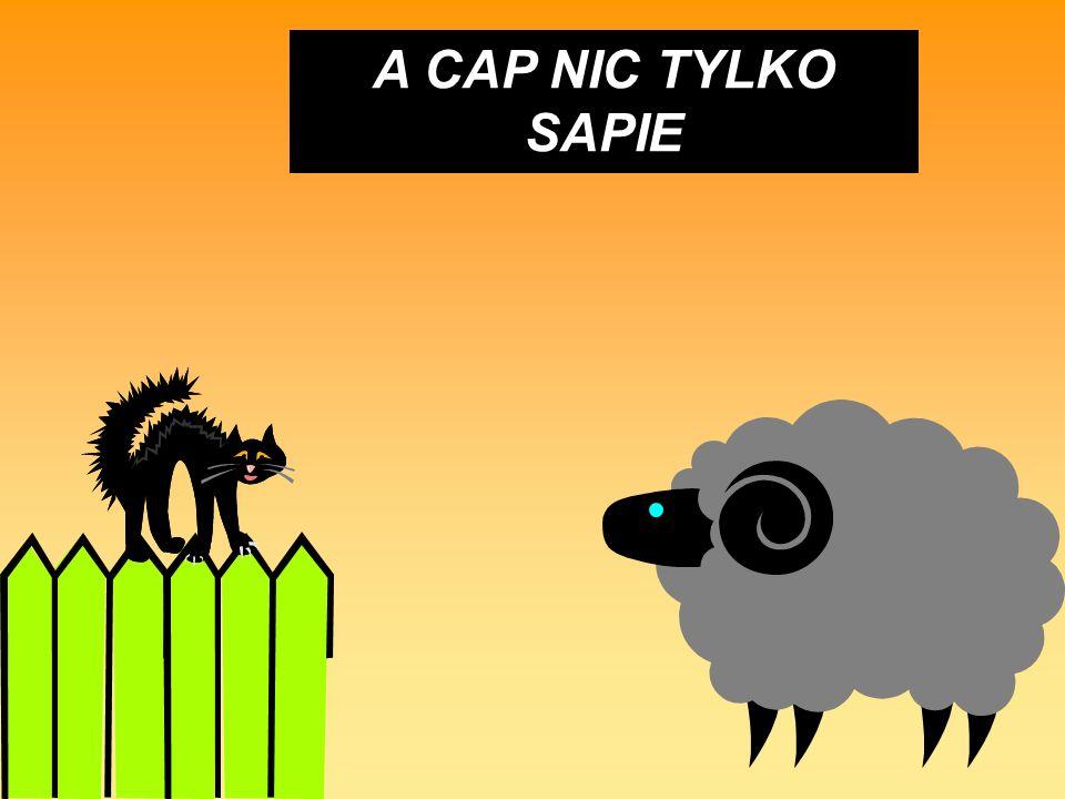 A CAP NIC TYLKO SAPIE