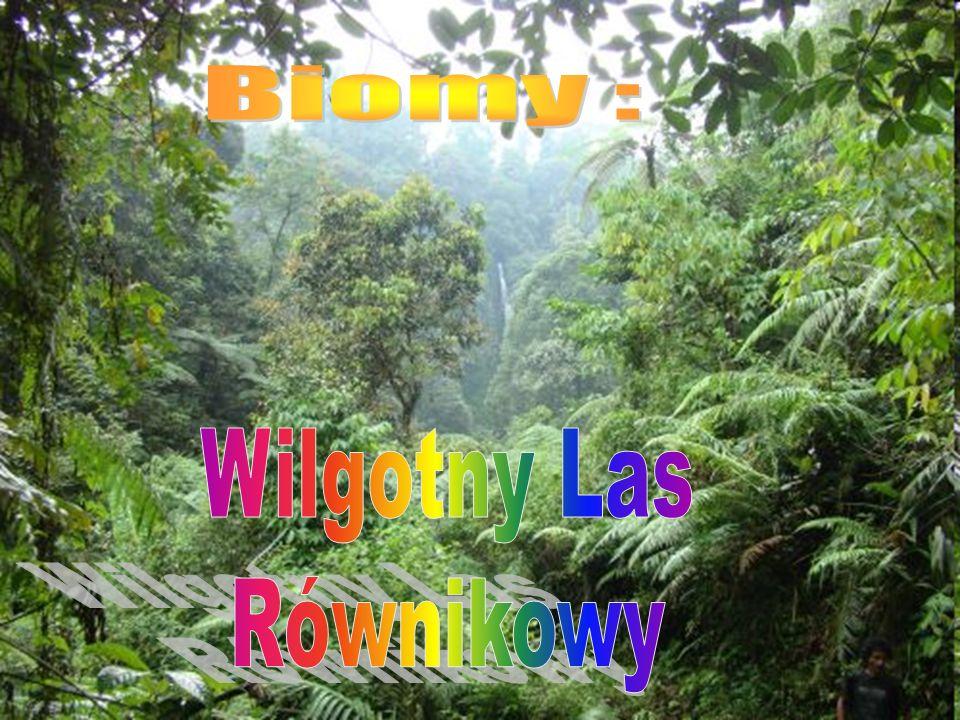 Biomy : Wilgotny Las Równikowy