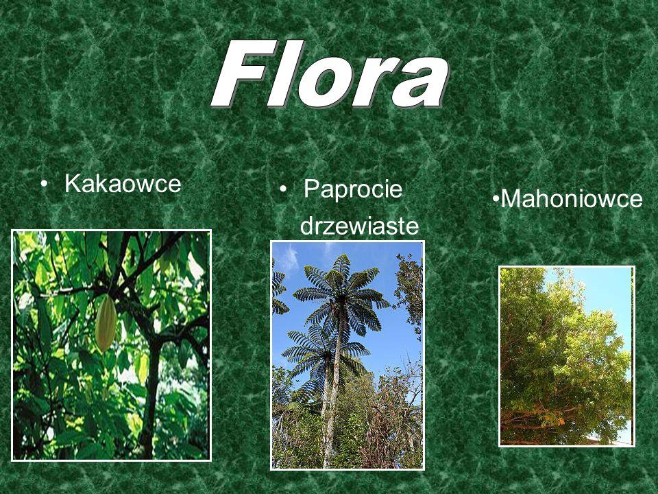 Flora Mahoniowce Kakaowce Paprocie drzewiaste
