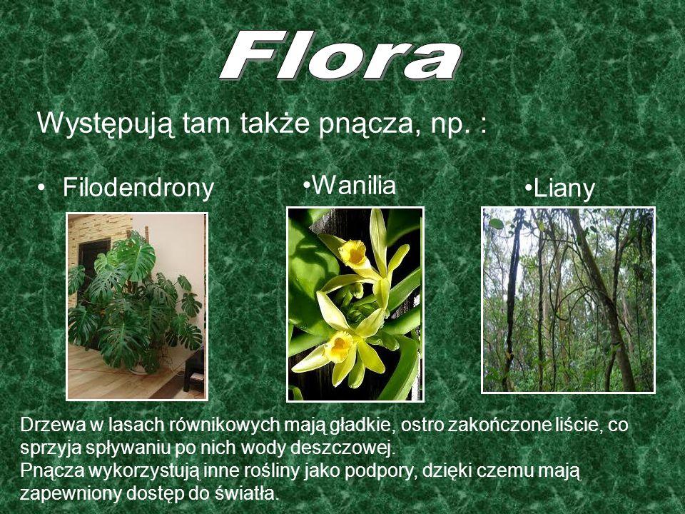 Flora Występują tam także pnącza, np. : Filodendrony Wanilia Liany