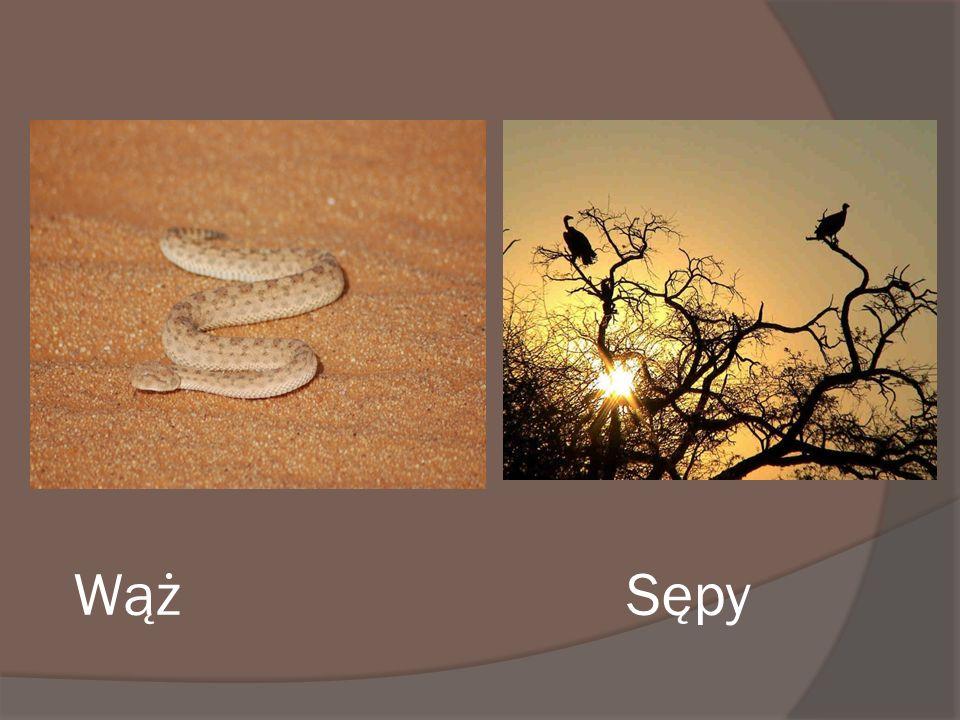Wąż Sępy