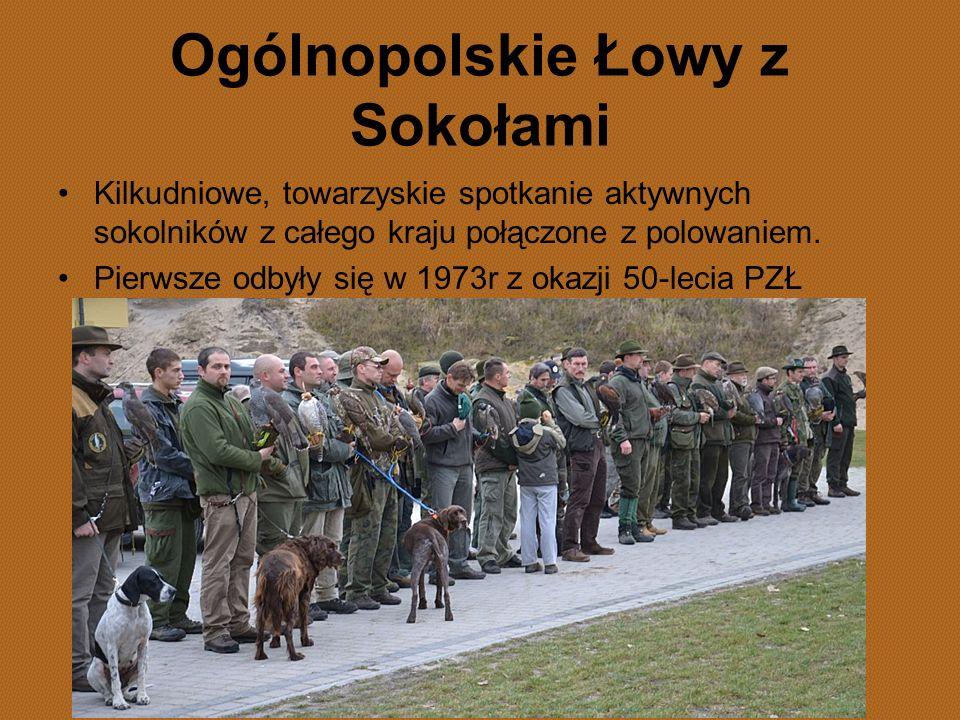 Ogólnopolskie Łowy z Sokołami