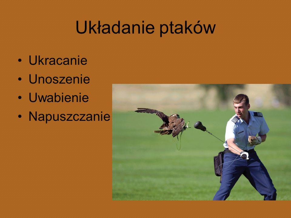 Układanie ptaków Ukracanie Unoszenie Uwabienie Napuszczanie