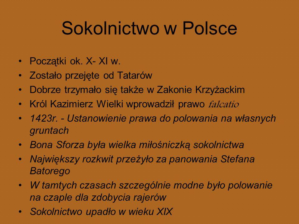 Sokolnictwo w Polsce Początki ok. X- XI w. Zostało przejęte od Tatarów
