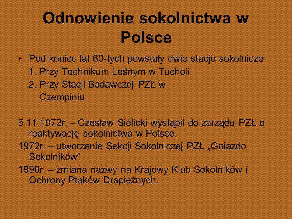 Odnowienie sokolnictwa w Polsce