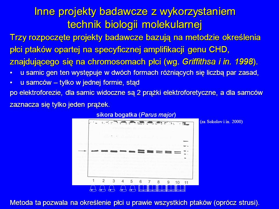Inne projekty badawcze z wykorzystaniem technik biologii molekularnej