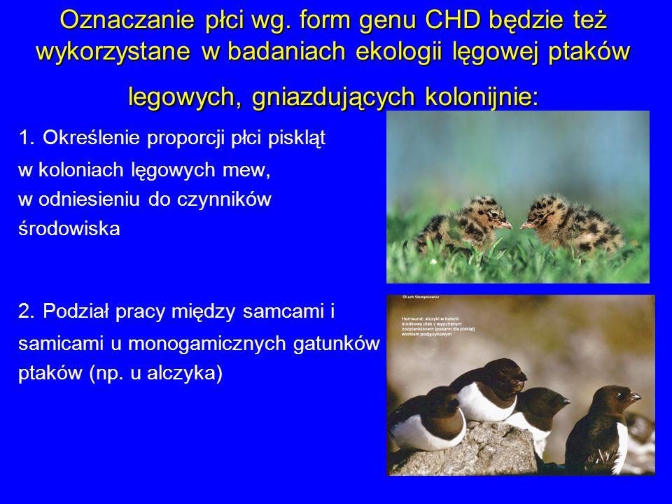 Oznaczanie płci wg. form genu CHD będzie też wykorzystane w badaniach ekologii lęgowej ptaków legowych, gniazdujących kolonijnie: