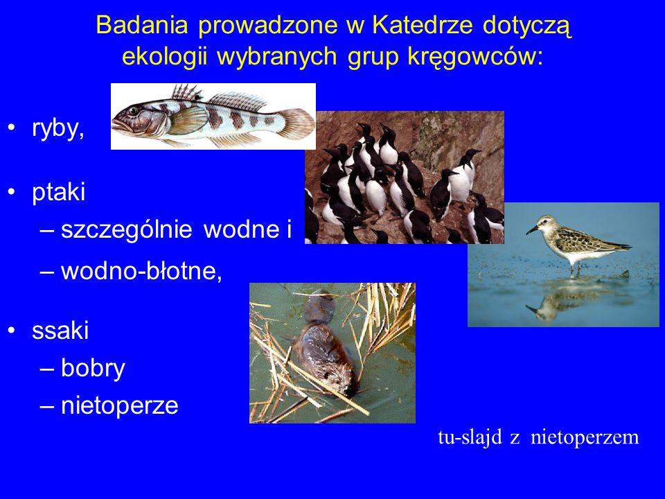 Badania prowadzone w Katedrze dotyczą ekologii wybranych grup kręgowców: