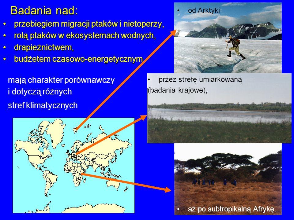 Badania nad: przebiegiem migracji ptaków i nietoperzy,
