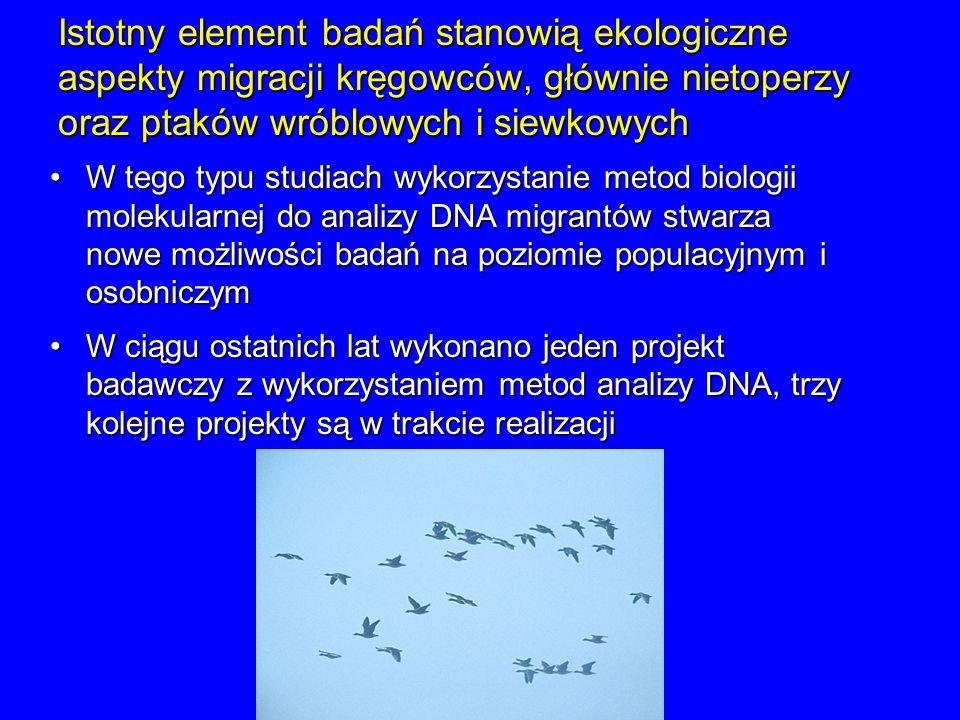 Istotny element badań stanowią ekologiczne aspekty migracji kręgowców, głównie nietoperzy oraz ptaków wróblowych i siewkowych