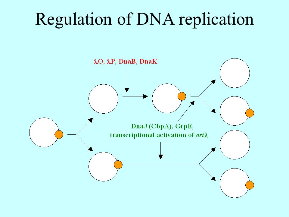 Regulation of DNA replication