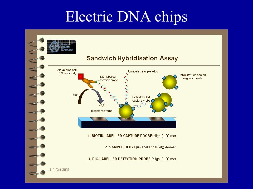 Electric DNA chips