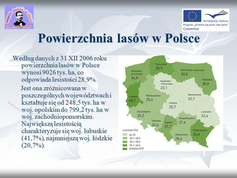 Powierzchnia lasów w Polsce