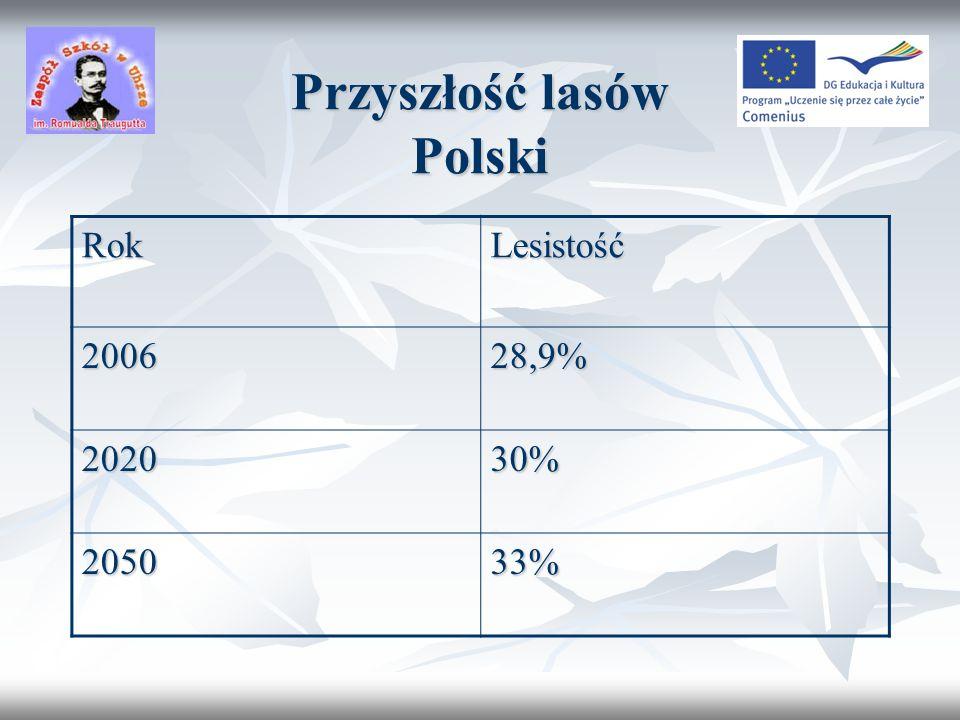 Przyszłość lasów Polski