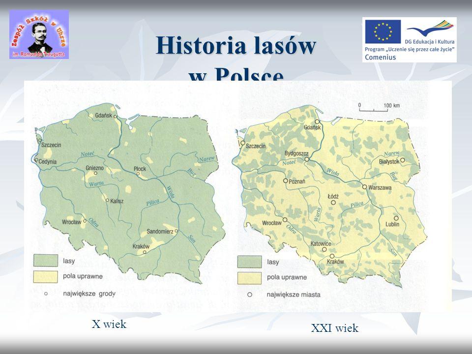 Historia lasów w Polsce
