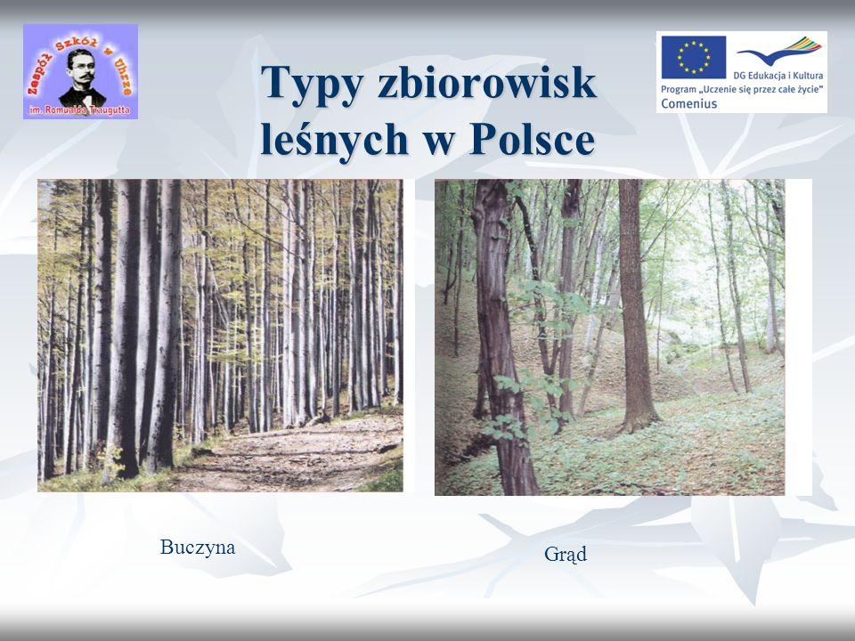 Typy zbiorowisk leśnych w Polsce