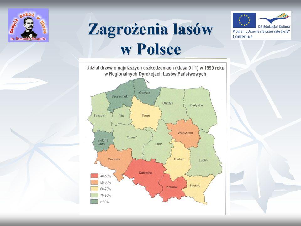 Zagrożenia lasów w Polsce