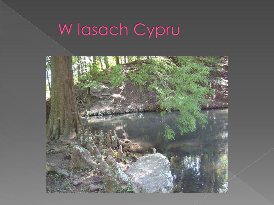 W lasach Cypru