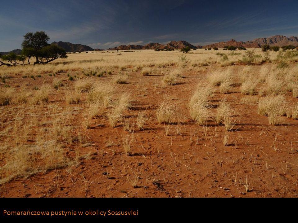 Pomarańczowa pustynia w okolicy Sossusvlei