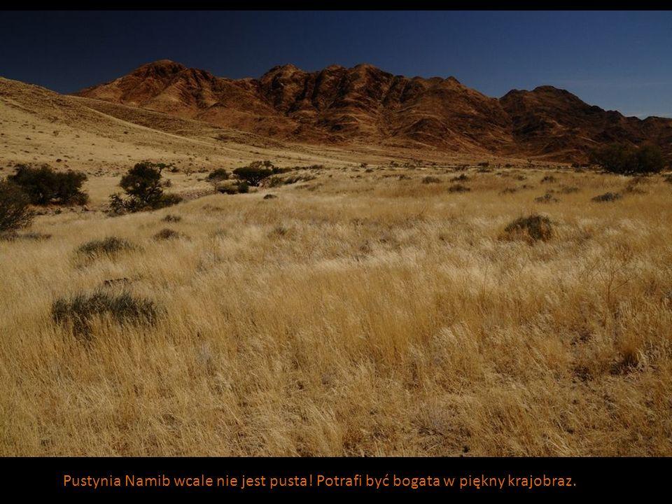 Pustynia Namib wcale nie jest pusta