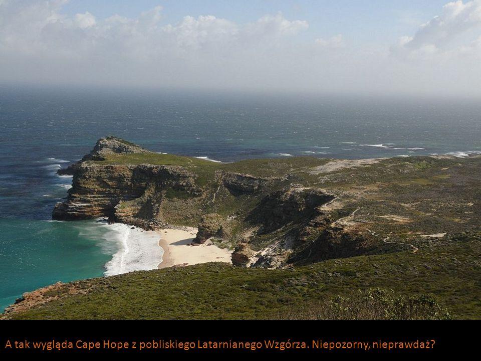 A tak wygląda Cape Hope z pobliskiego Latarnianego Wzgórza