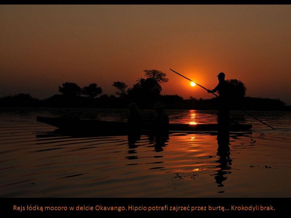 Rejs łódką mocoro w delcie Okavango