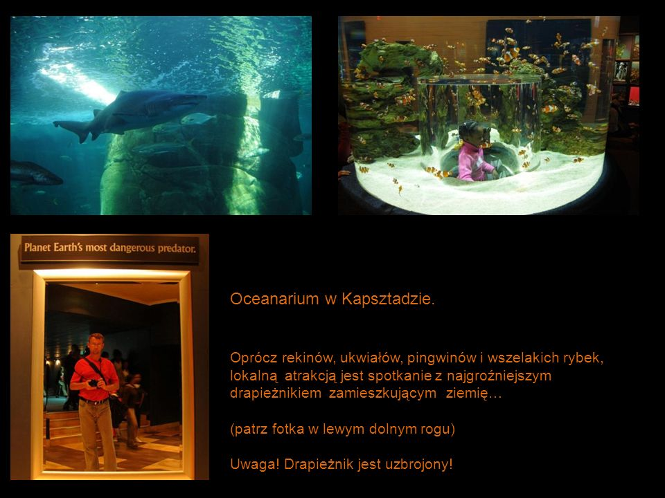 Oceanarium w Kapsztadzie.