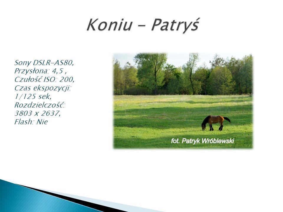 Koniu - Patryś Sony DSLR-AS80, Przysłona: 4,5 , Czułość ISO: 200,