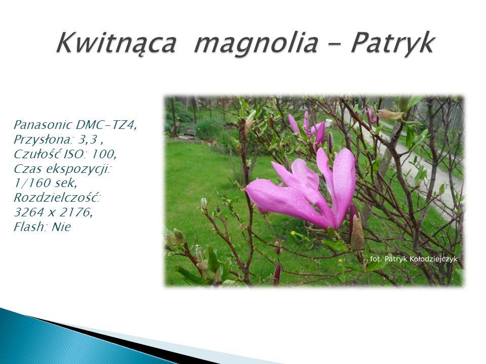 Kwitnąca magnolia - Patryk