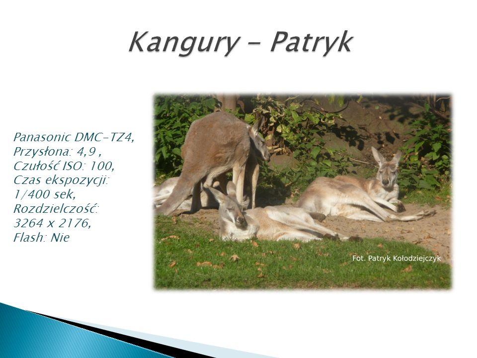 Kangury - Patryk Panasonic DMC-TZ4, Przysłona: 4,9 , Czułość ISO: 100,