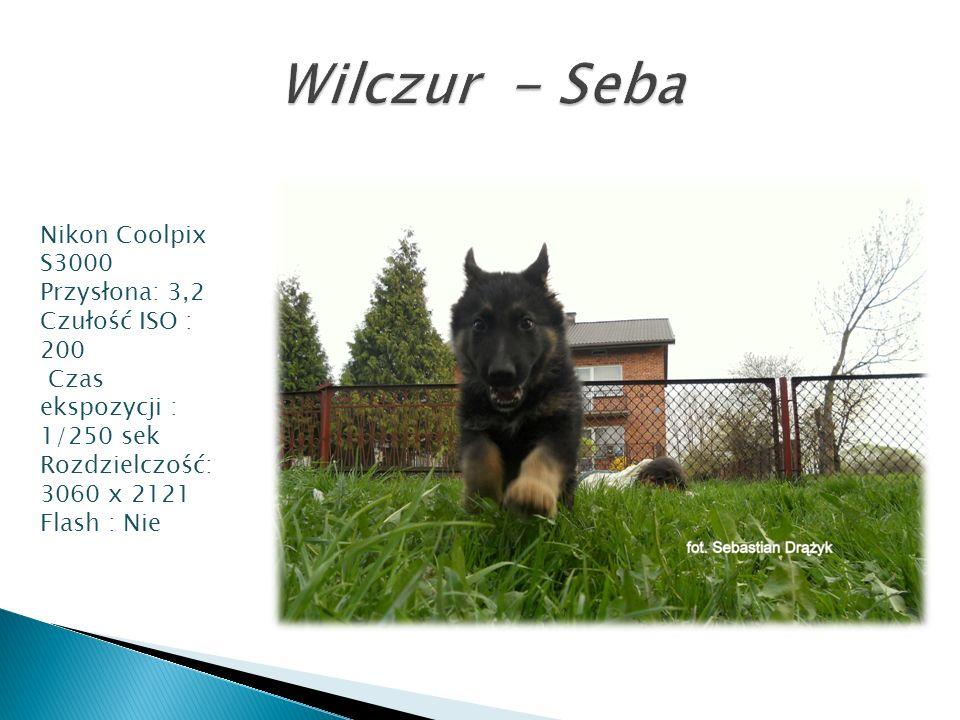 Wilczur - Seba Nikon Coolpix S3000 Przysłona: 3,2 Czułość ISO : 200