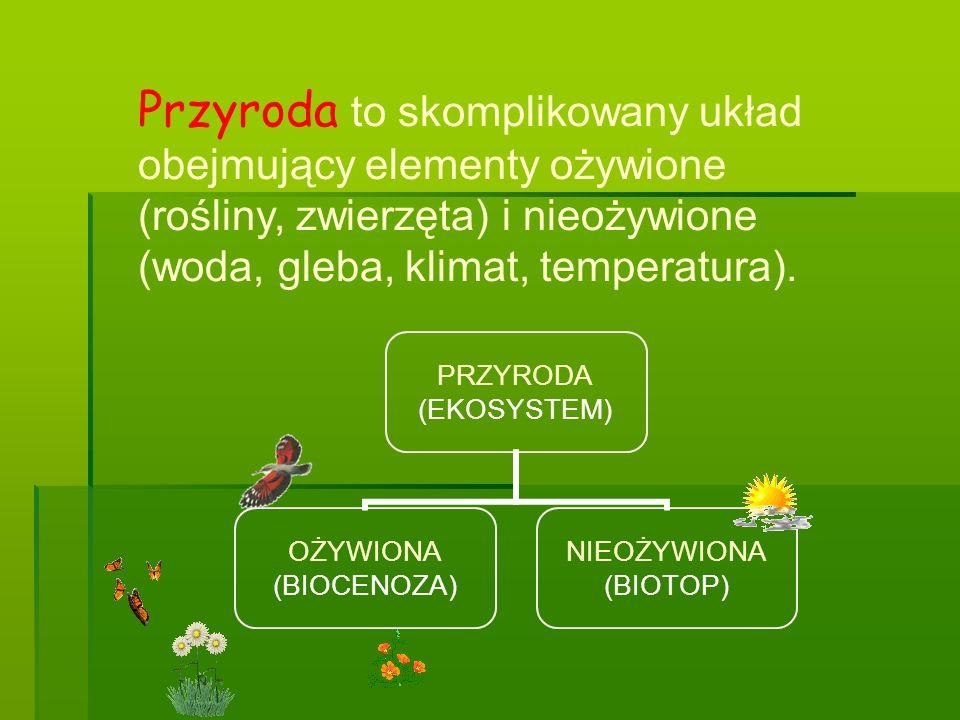 Przyroda to skomplikowany układ obejmujący elementy ożywione