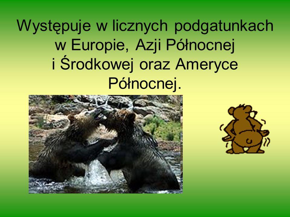 Występuje w licznych podgatunkach w Europie, Azji Północnej i Środkowej oraz Ameryce Północnej.