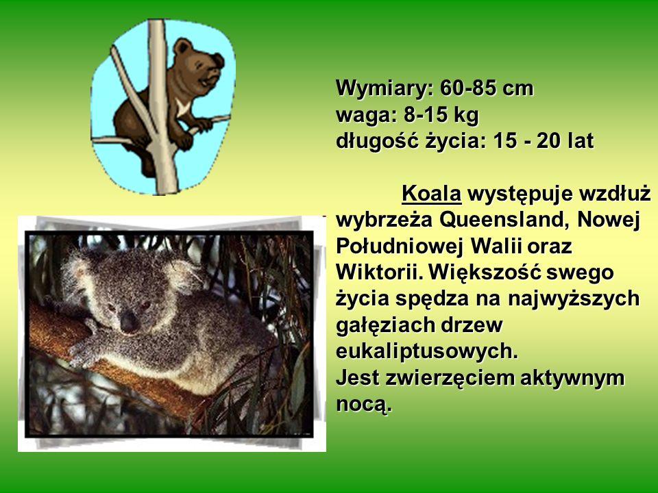 Wymiary: 60-85 cm waga: 8-15 kg. długość życia: 15 - 20 lat.