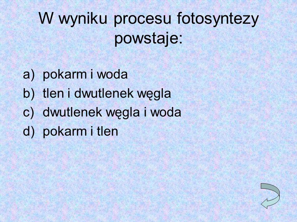 W wyniku procesu fotosyntezy powstaje: