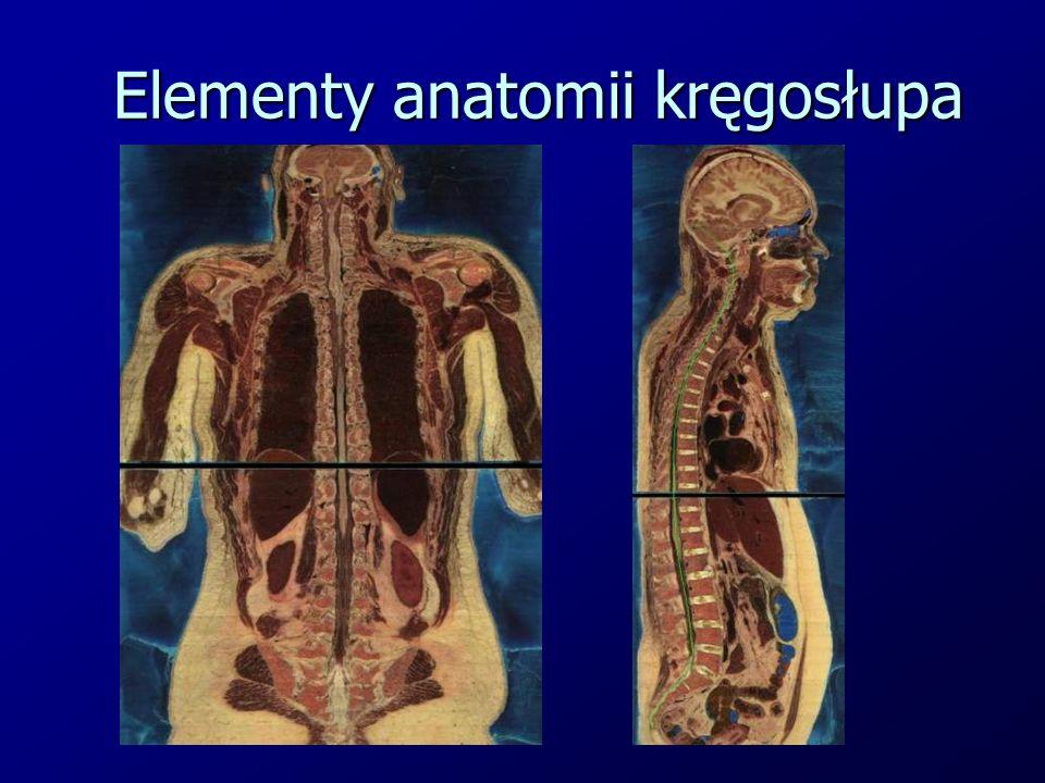 Elementy anatomii kręgosłupa