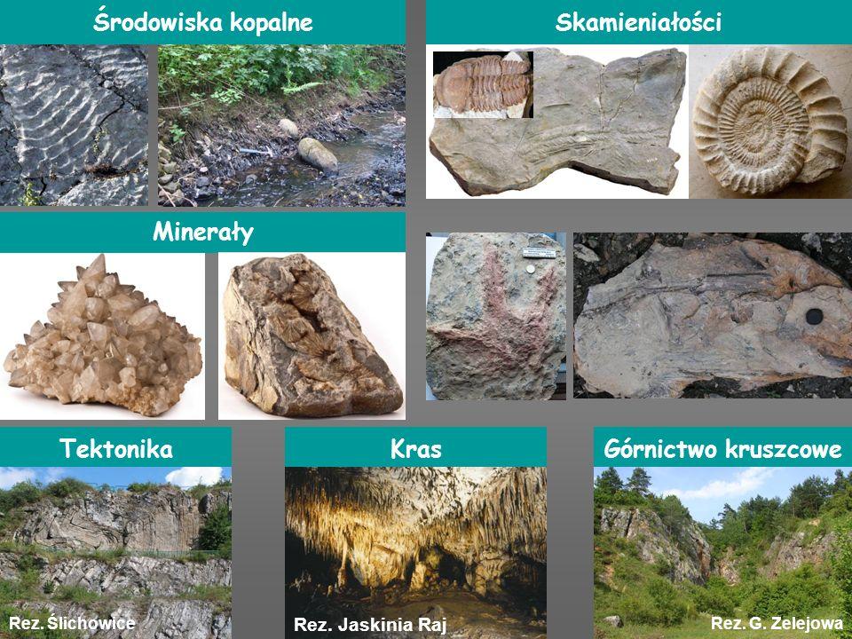 Środowiska kopalne Skamieniałości Minerały Tektonika Kras