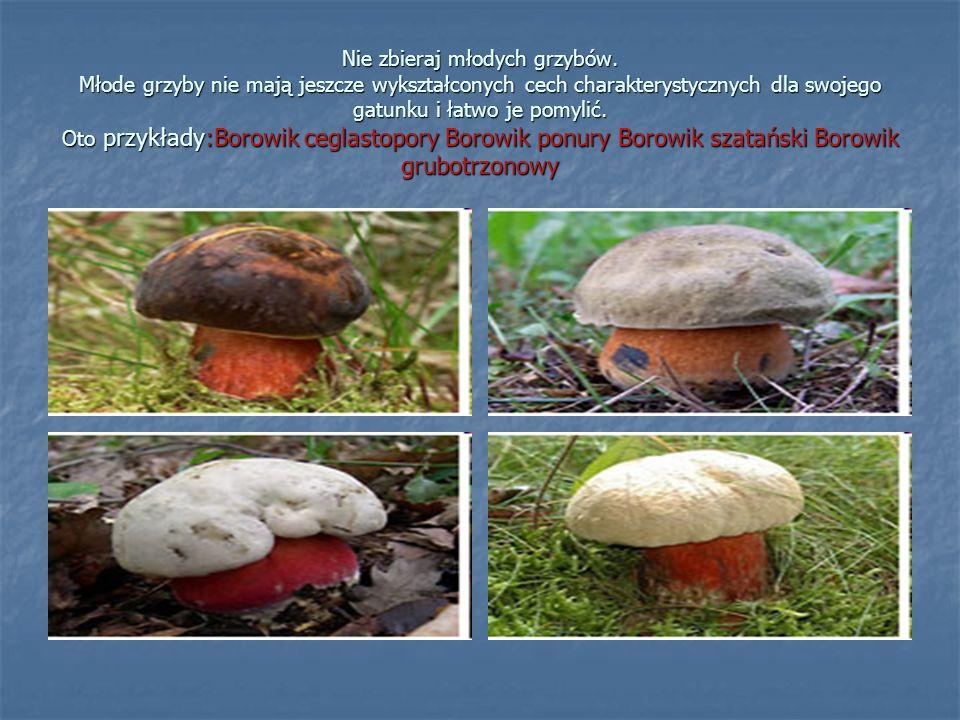 Nie zbieraj młodych grzybów