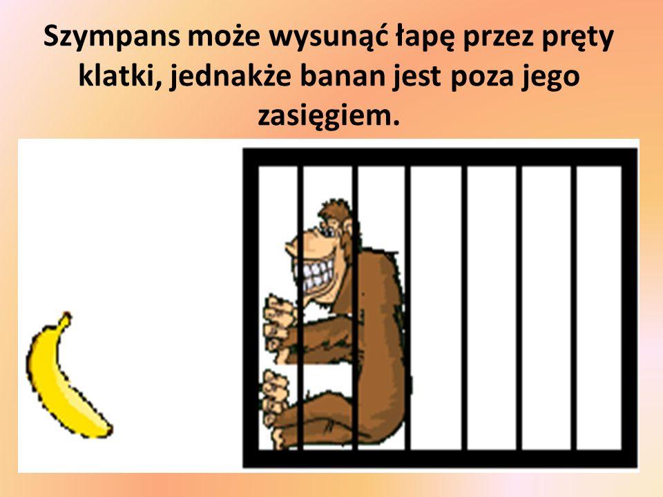 Szympans może wysunąć łapę przez pręty klatki, jednakże banan jest poza jego zasięgiem.