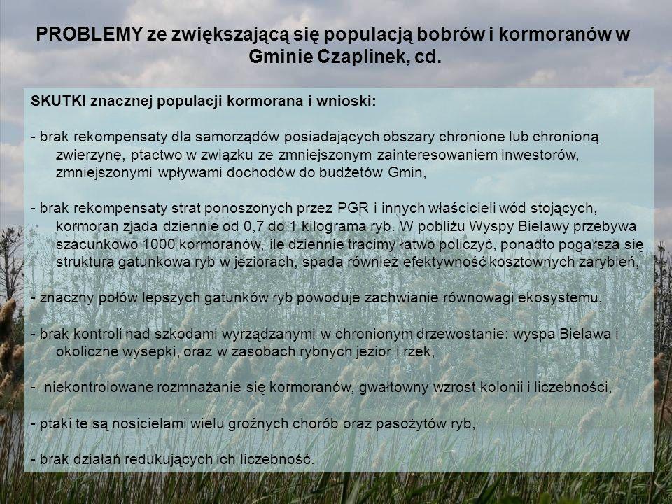 PROBLEMY ze zwiększającą się populacją bobrów i kormoranów w Gminie Czaplinek, cd.