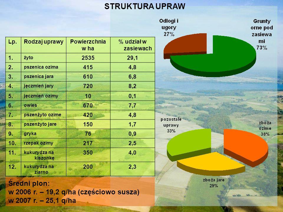 STRUKTURA UPRAW Średni plon: w 2006 r. – 19,2 q/ha (częściowo susza)
