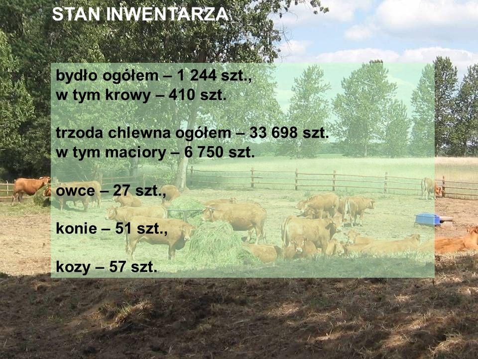 STAN INWENTARZA bydło ogółem – 1 244 szt., w tym krowy – 410 szt.