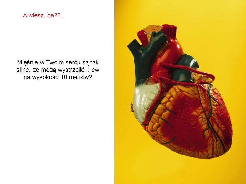 A wiesz, że ... Mięśnie w Twoim sercu są tak silne, że mogą wystrzelić krew na wysokość 10 metrów
