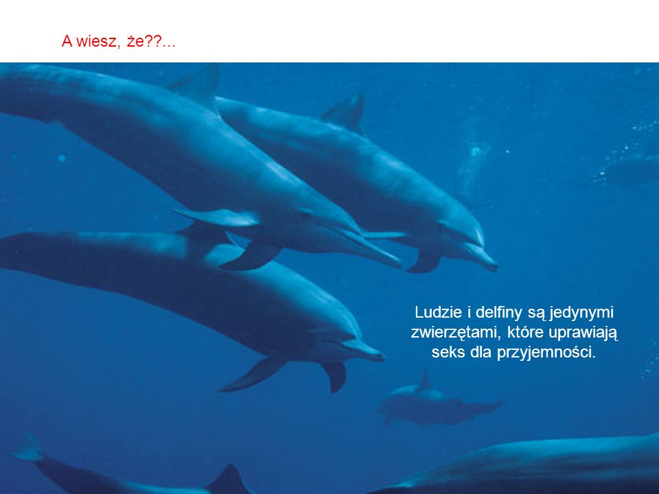 A wiesz, że ... Ludzie i delfiny są jedynymi zwierzętami, które uprawiają seks dla przyjemności.